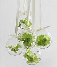 Glass Flower Vases for hanging Dia 15cm Round with an Opening Round Bottom, for Planting & Decorating