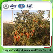 New Season Organic Goji Berry