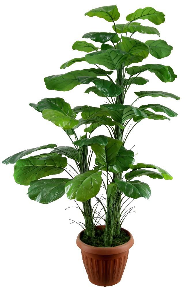 La grande feuille feuilles persistantes pe mat riau for Grandes plantes vertes