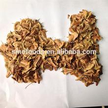 yang zhong nan shan zi ad alta germinazione tasso araucaria bonsai