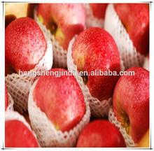 fresh fruit exporter/china qinguan apple/bulk fresh apple