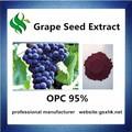 Semente de uva proanthocyanidin 95%