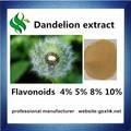 orgânicos ervas plantas artificiais dandelion herb