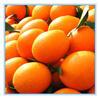 wholesale fruit prices of navel orange/gannan fresh navel orange