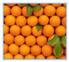 import china navel orange/mandarin orange price/orange fruit price