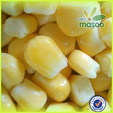IQF bulk or canned frozen sweet corn