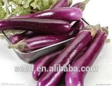 super long purple F1 eggplant seeds SXE No.4