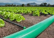 Novo material pe acessórios para tubos de acoplamento pimenta plantação made in China