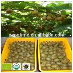 2014 New Fresh Organic Green Fresh Kiwi