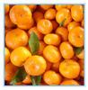 sweet baby mandarin orange supplier/the price nanfeng baby orange