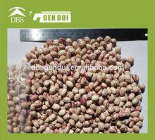 New Crop Light Speckled Kidney Beans, Xingjiang Origin