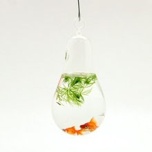 special glass goldfish bowl