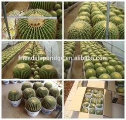 mini small big size multi color outdoor indoor cactus bonsai