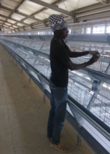 Hot selling A Type automatic poultry farm cage for layer/hen/egg chicken in Algeria