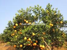 export orange