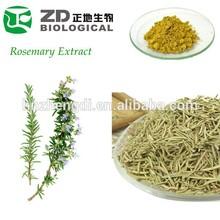 Rosemary Extract Natural Preservative Rosmarinic Acid in Medicinal Herbal Plants