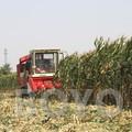 mini se combinan de mazorca de maíz máquinas de cosechadora