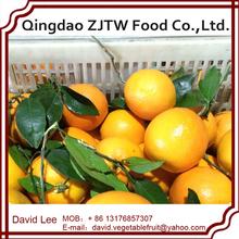 China Fresh Orange Export Canada Market