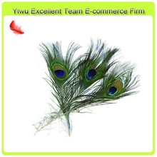 Top Quality with Big Eye Peacock Feathers for Sale