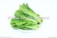 Mostarda verde extrato de vitamina A