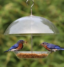 Birds Choice - SUPPER DOME Bird Feeder Seed Suet Mealworm feeding
