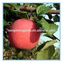 natural organic fresh apple/blush fuji apple