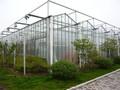 venlo glas gewächshaus für die landwirtschaft nutzen
