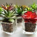 Artificial plantas suculentas