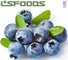 Sell IQF frozen blueberry bulk frozen blueberries