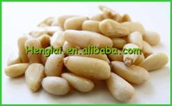 organic food/dry fruit pine nut/Good Quality Pine Nuts for sale