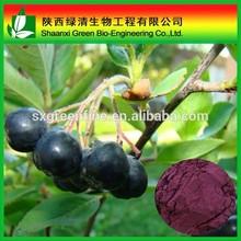GMP factory sypply Acai Berry Extract 4:1/Acai Berry Powder 10:1