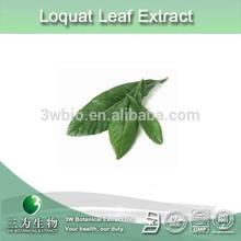 high quality ursolic acid / maslinic acid loquat leaf extract