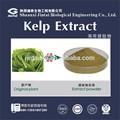 10% ascophyllum nodosum estratto fucoxantina