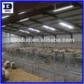 Bdss estrutura de aço ovinos/fazenda galpão