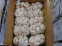 Natural Chinese Fresh white garlic wholesales