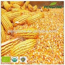 high quality good price organic yellow corn