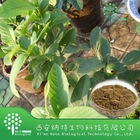 100% Nature Guava Leaf Extract