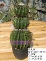 กระบองเพชร, ทุกประเภทของต้นกระบองเพชรพืช, กระบองเพชรพืช