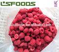 rojo congelado frutas frambuesa