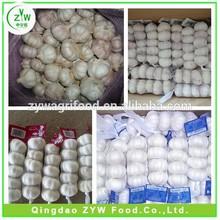 fresh garlic/white garlic/garlic price good quality