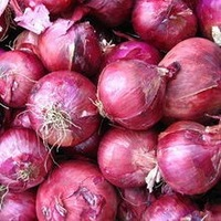 Hot sale red onions market price
