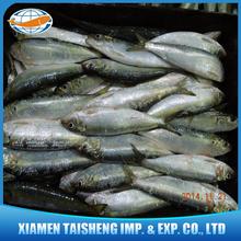 Frozen Sardine Bait Fish