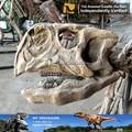 Meine dino- 2015 neu authentische dinosaurier kopf fossilen