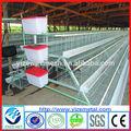 Couche de poulet cage/entreprises de transformation du poulet