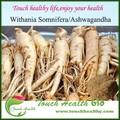 Touchhealthy alimentação Ashwagandha raiz Powder1.5 % - 5% Withanolides / Withania Somnifera extrato em pó / Ashwagandha pó