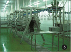 High Quality Halal A shape Chicken Plucker, Dehairing Machine for Poultry Goose Duck Bird Chicken Slaughter Plant