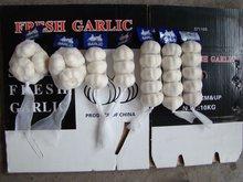 Natural Fresh Garlic Manufacturer From China