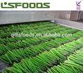 venta al por mayor de china espárrago verde congelado para la venta