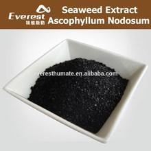 Natural Ascophyllum Nodosum Shiny Flake, 100% Water Solubility Seaweed Extract