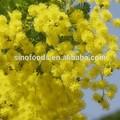 Il huan jinminimum acacia 4602-84-0 huile huile essentielle